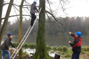 erecting bat boxes in Cirencester Park