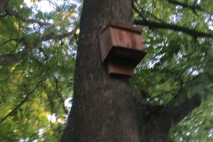 bat box in tree