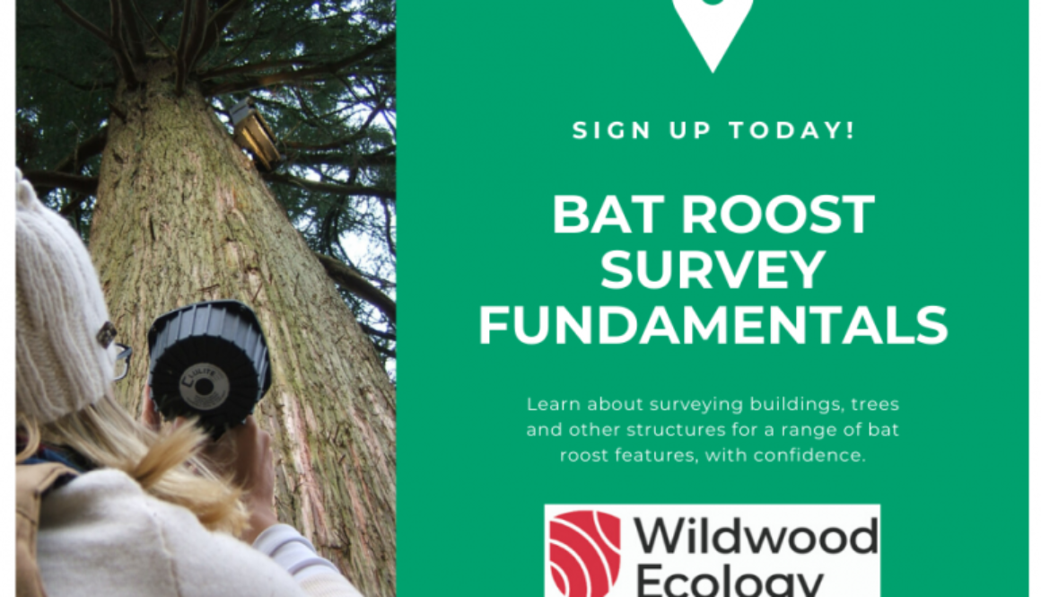 Sign-Up-Bat-Roost-Survey-Fundamentals-770x516